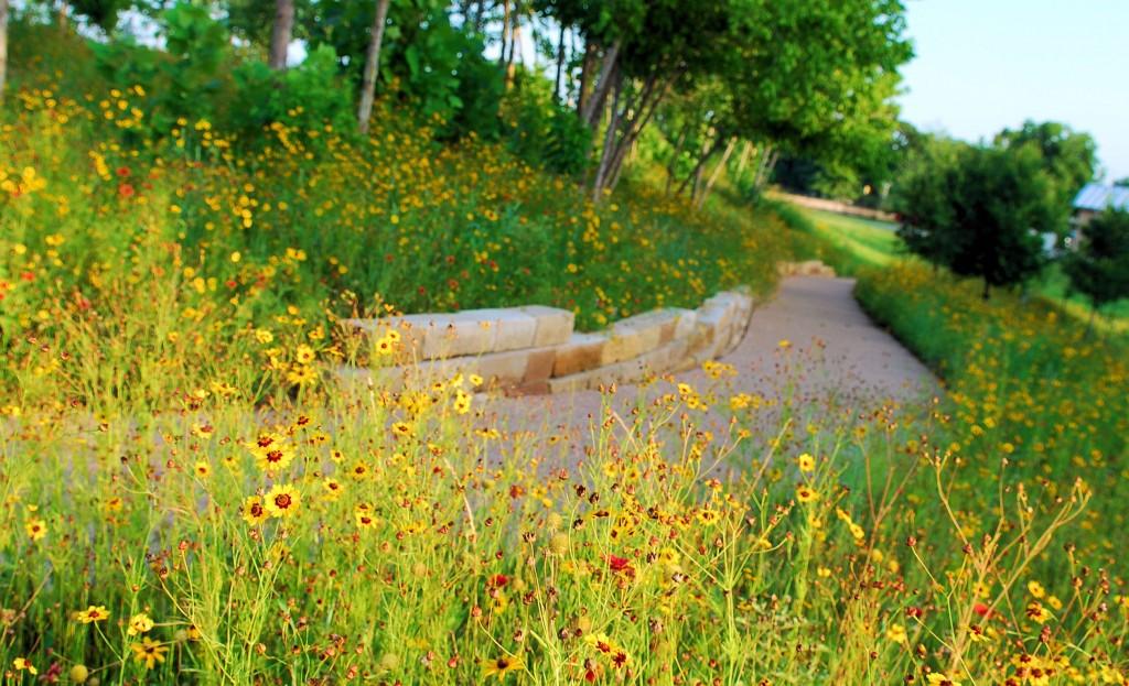 Mueller-Parks-1---Wildflower-Trail