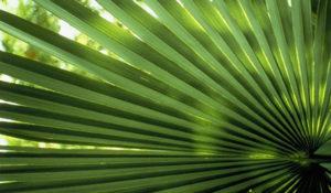 Leaf-FeaturedImage
