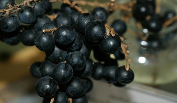 Fruit-website